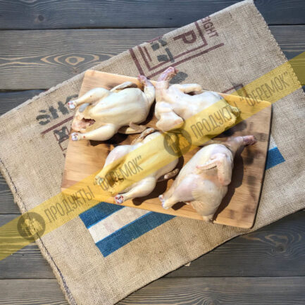 цыплята корнишоны в Новосибирске